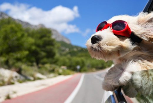 All about travelling with pets